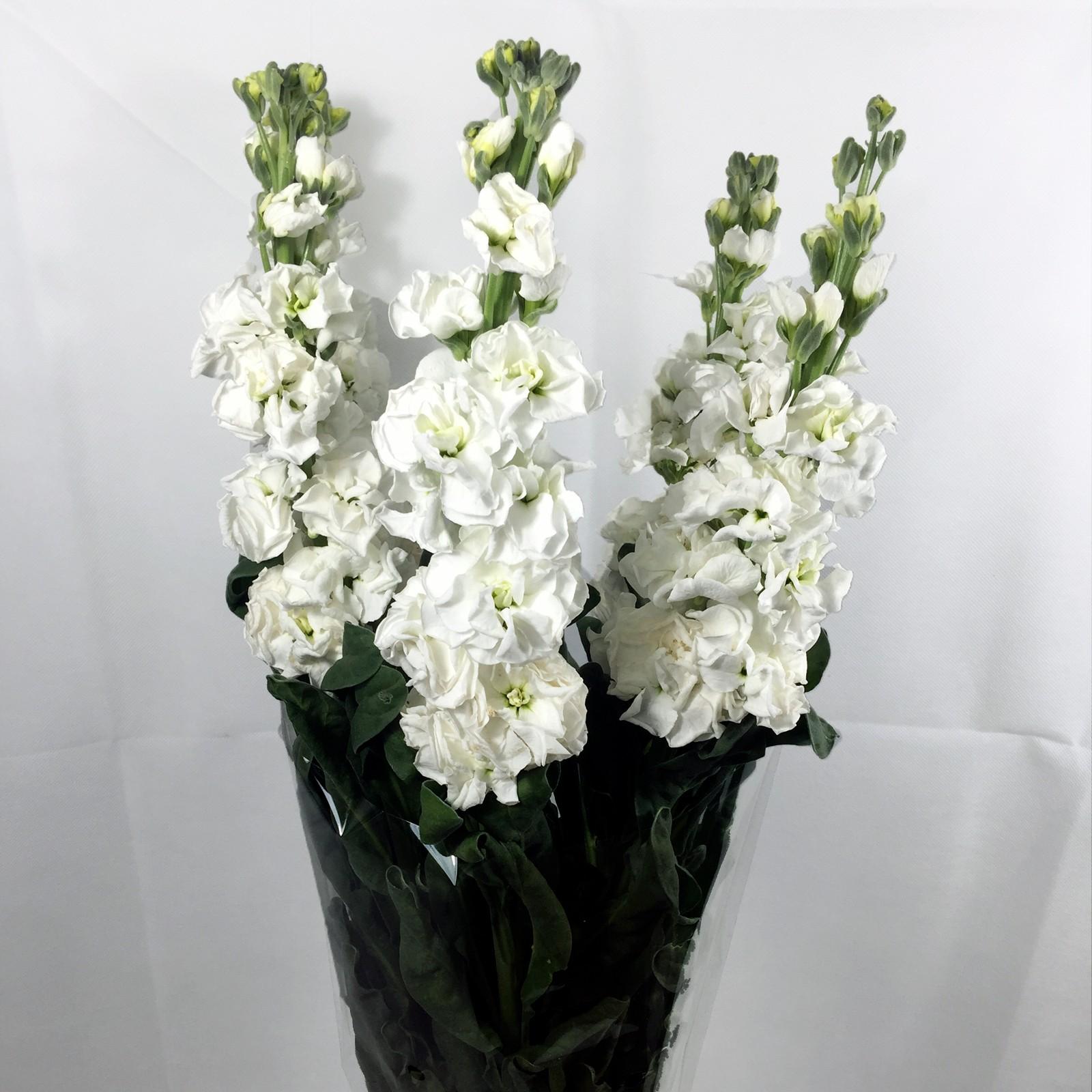 Ofertas en Flor Cortada