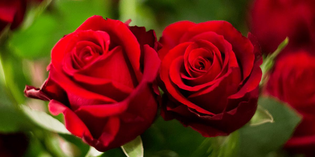 Flor cortada: Como cuidar las flores