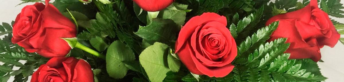 slid-rosas