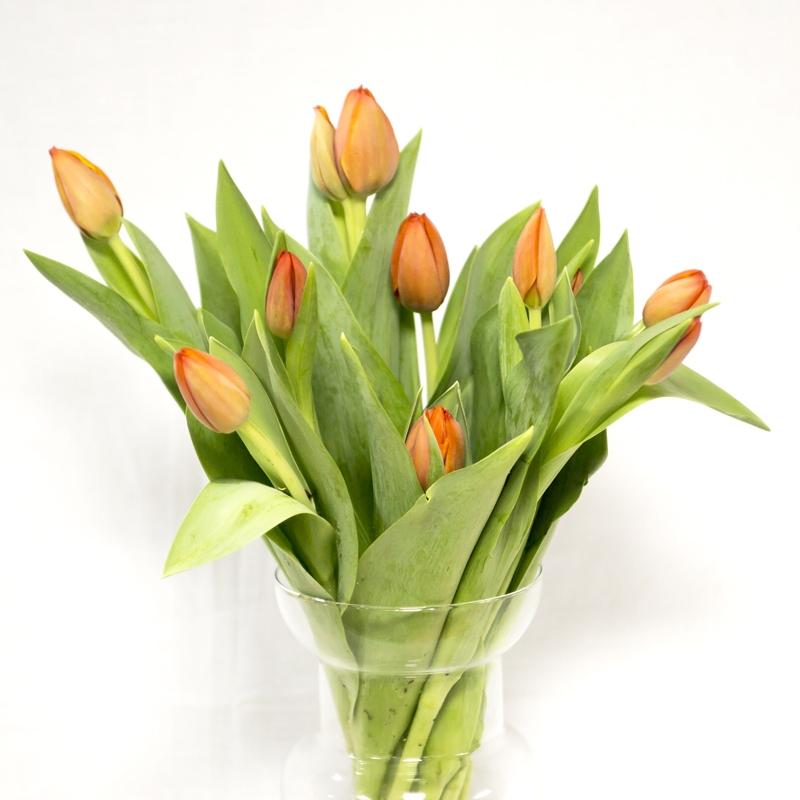 tulipán naranja